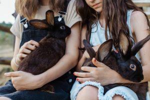 verhuizen met huisdieren